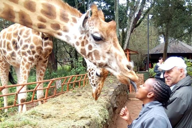 Nairobi Highlights Day Tour