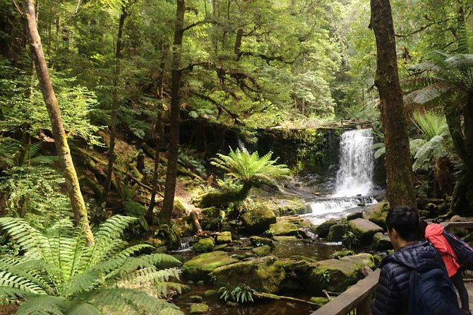Half-Day: Mount Field National Park and Russell Falls Tour from Hobart