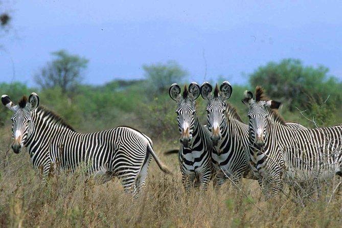 Increadible Meru Special Safari