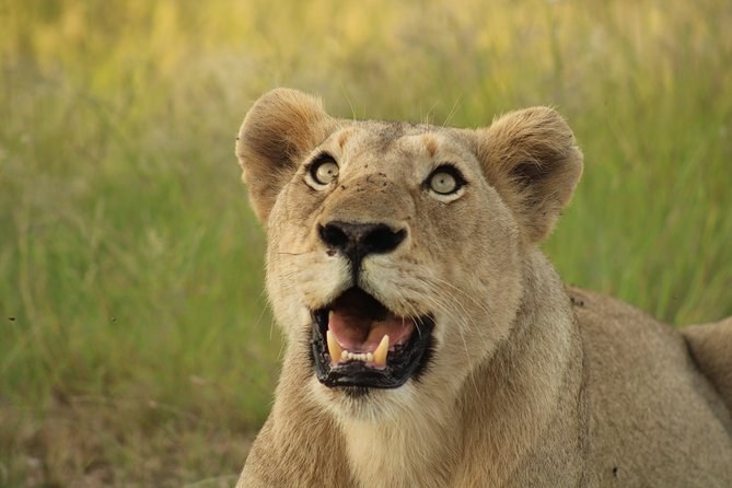 Budget Kruger Safari
