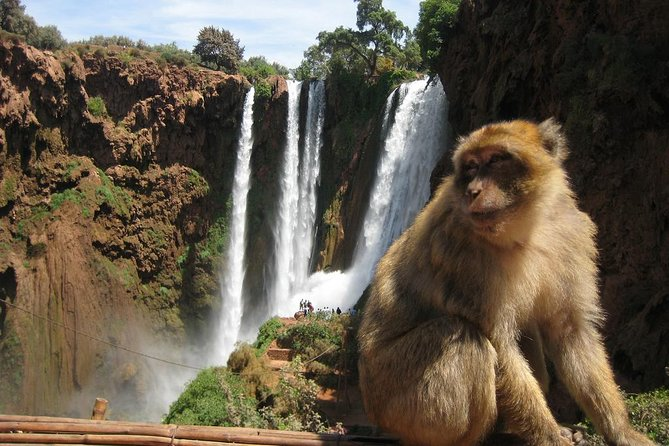 Private day trip to Ouzoud waterfalls from Marrakech photo 8