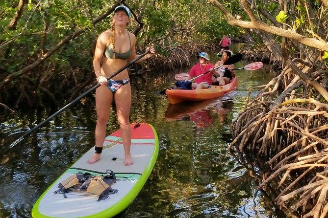 Kayak and Stand Up Paddleboard Rentals at Lido Mangrove Tunnels
