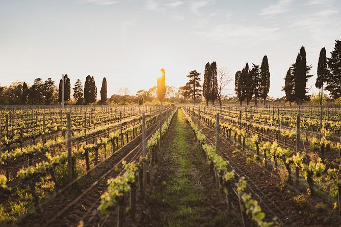 Supertuscan wine day tour from Livorno, Lucca, Pisa or Piombino