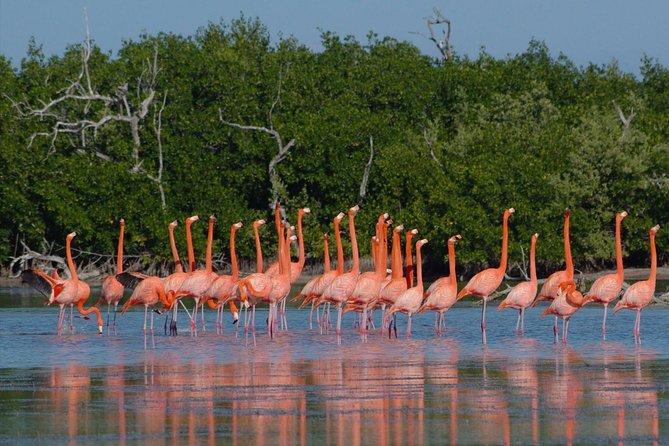 Go Flamingo (Rio Lagartos - Las Coloradas - Ek Balam) from Valladolid