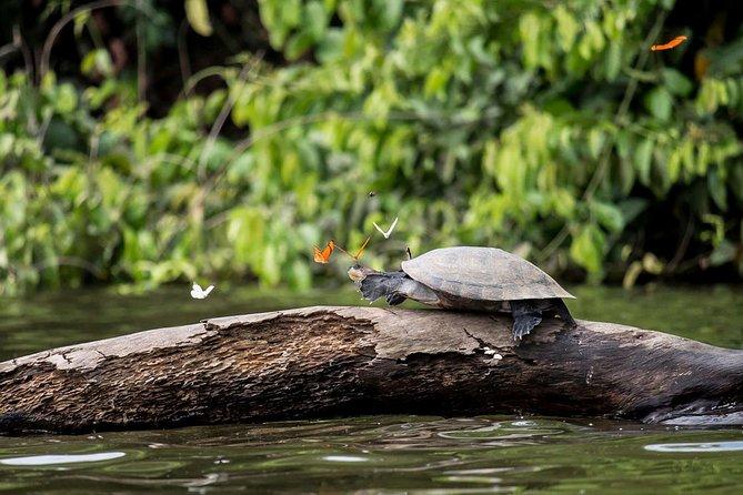 3 days 2 nights – Peruvian Tambopata Jungle