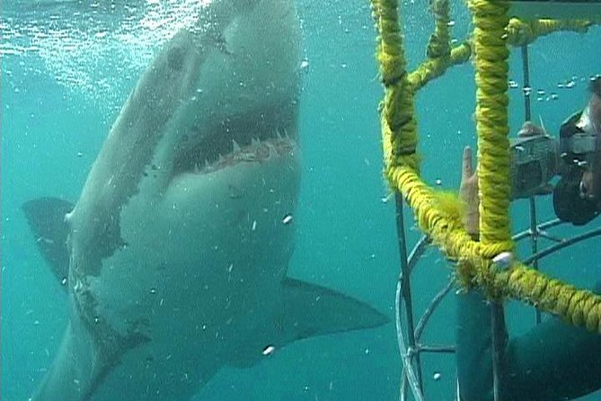 SHARK CAGE DIVING and VIEWING (Self Drive)