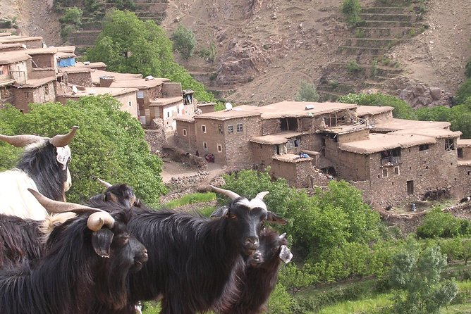 Private Guided Atlas Day Tour from Marrakech with lunch in a Berber family home
