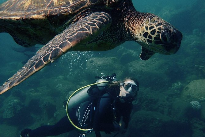Kauai's Ultimate South Shore 2 Tank Dive (Certified Divers Only)