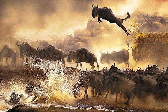 7 Days Migration Mara River Crossing Safari
