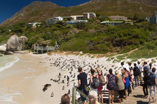Cape town Private, Cape peninsula penguin Tour