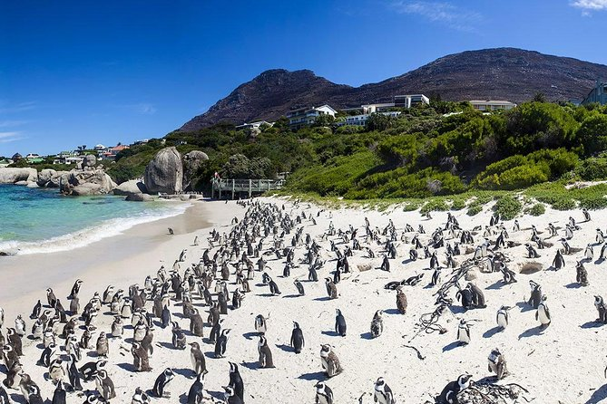 Cape town Private, Cape peninsula penguin Tour