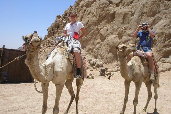 Camel ride in Sharm elsheikh desert