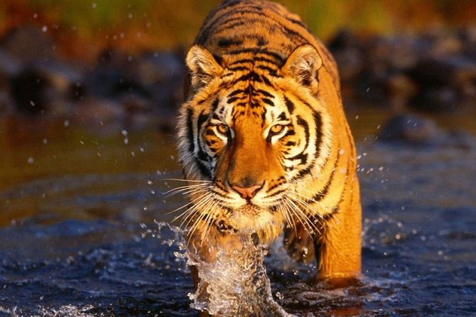 7-Days Delhi Agra Jaipur Ranthambore & Udaipur Tour {Tigers & City of Lakes}