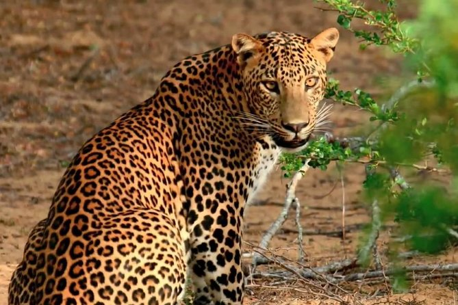 2 Days Tour to Udawalawe & Yala National Park From Colombo