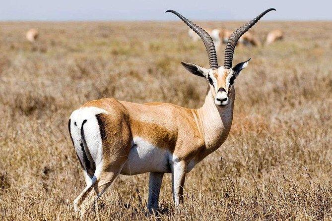 5 Day Mid range Tanzania Safari