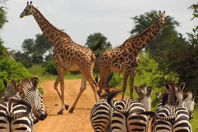 3 Day Tanzania Luxury Safari
