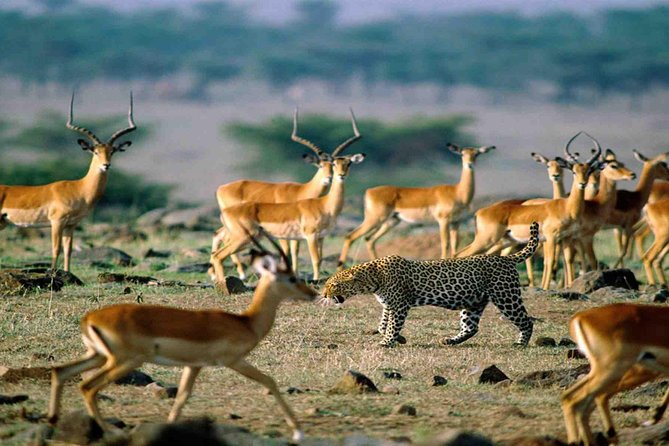 6 days 5 nights Mid Range Safari
