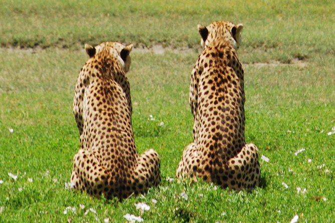 7 Days Tanzania Classic Safari