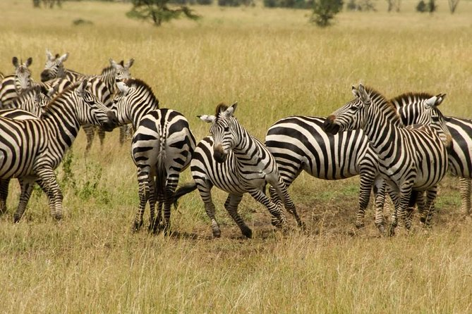 7days / 6 nights Mid Range Safari