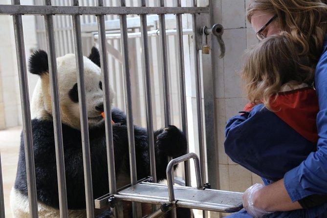 Excursión privada de un día al Centro de Pandas de Dujiangyan, incluye opción de cargar al panda.
