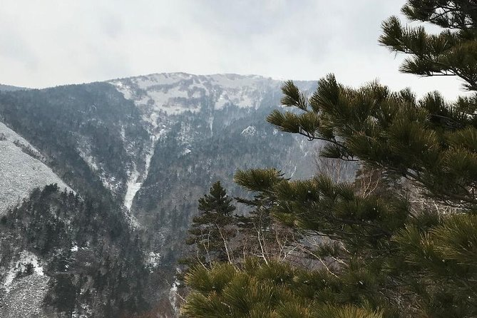Hike to mountain Falaza and enjoy beauty of Siberian taiga woods