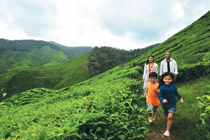 2-Day Cameron Highlands from Kuala Lumpur photo 3