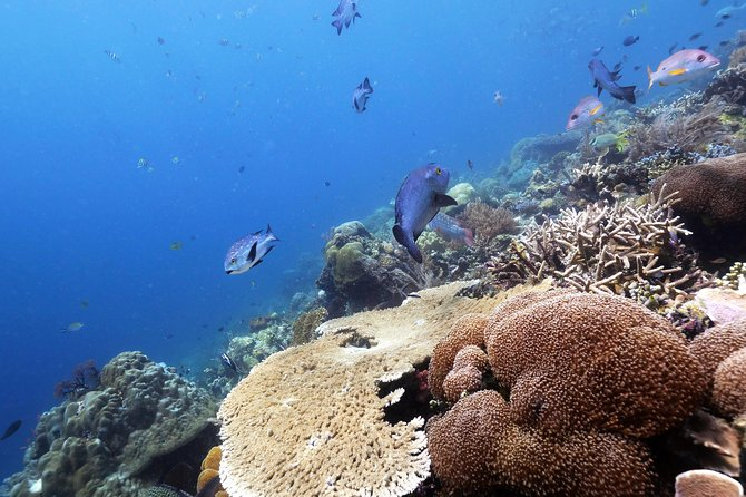 Nusa Penida 1 Day Diving Trip - For Certified Diver photo 9