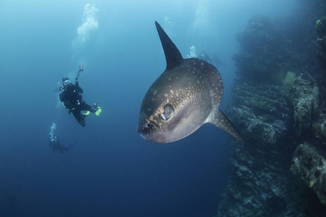 Nusa Penida 1 Day Diving Trip - For Certified Diver photo 6