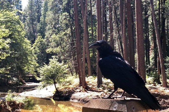 Excursión de un día al Parque Nacional de Yosemite desde San Francisco, San Francisco, CA, ESTADOS UNIDOS