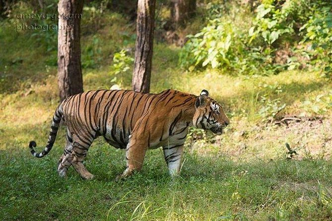 2-Day Private Tour to Ranthambhore Tiger Safari Tour from Jaipur photo 4