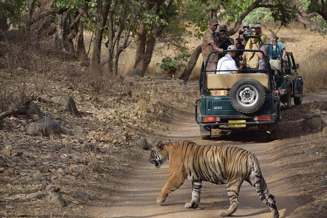 2-Day Private Tour to Ranthambhore Tiger Safari Tour from Jaipur photo 6