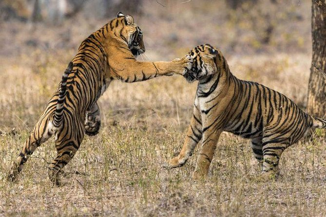 2-Day Private Tour to Ranthambhore Tiger Safari Tour from Jaipur photo 3