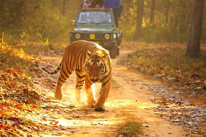Ranthambhore Tiger Safari Day Tour from Jaipur photo 2