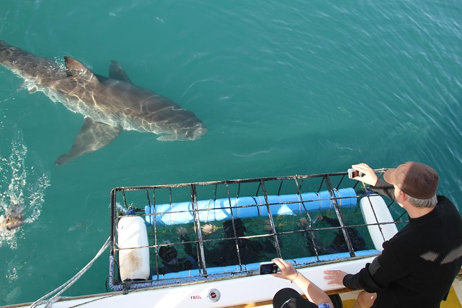 Shark cage diving & viewing tours in Gansbaai