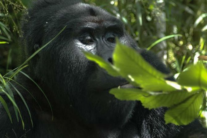 3 days Gorilla tracking Bwindi & Lake Bunyonyi ( minimum 2 persons )