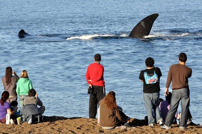 Doradillo Beach Whale Watching Experience