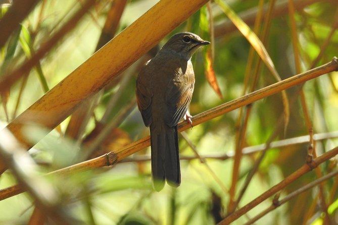 Birdwatching Atitlan at Rey Tepepul