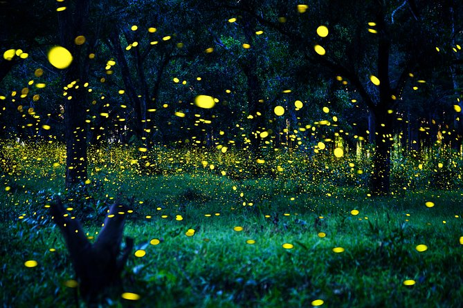 Private Tour: Kuala Selangor Firefly Blinkings including Seafood Dinner
