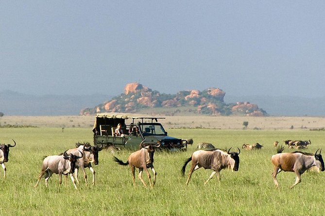 3 days 2 nights Budget Camping Safari without Serengeti