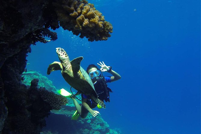 Scuba Diving Boat Trip - Hurghada photo 1
