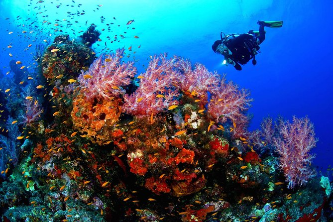 Scuba Diving Boat Trip - Hurghada photo 13