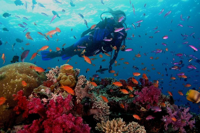 Scuba Diving Boat Trip - Hurghada photo 14