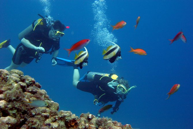 Scuba Diving Boat Trip - Hurghada photo 3