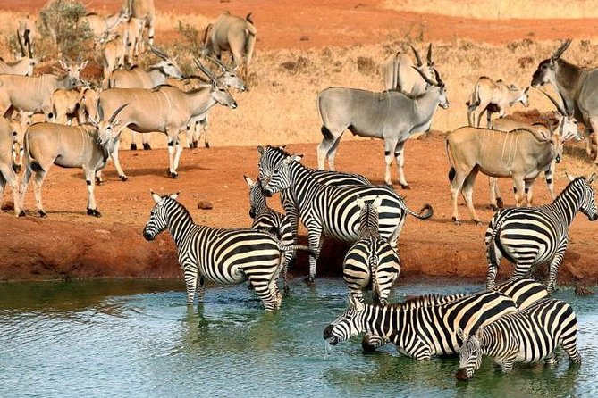 4 Days Mombasa Safari – Tsavo West, Amboseli & Tsavo East National Parks photo 22