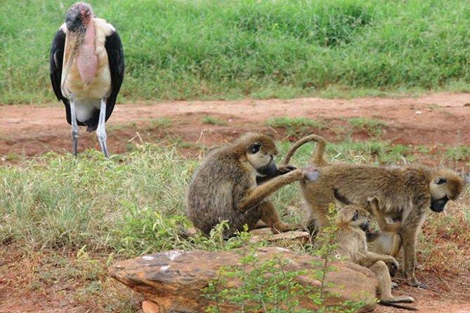 3 Days Tsavo East &lumo Wildlife Sanctuary