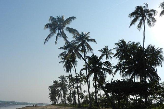 Coconut Coast and Praia do Forte - the famous beaches