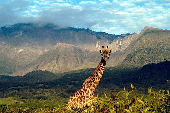 1 Day Arusha National Park