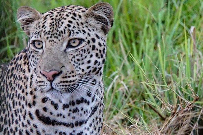 12 Days Uganda Wildlife safari with Chimpanzee and Gorillas