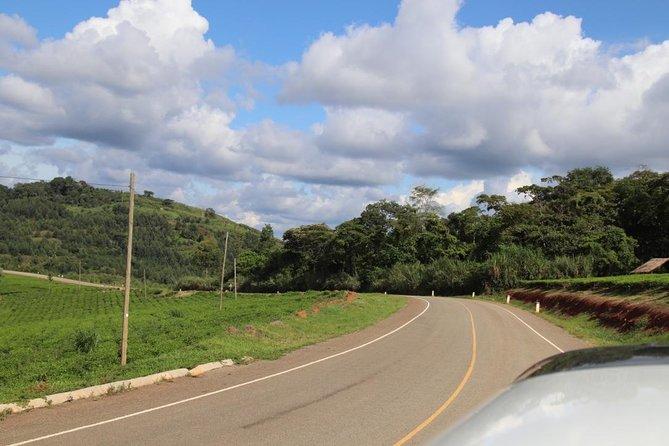 10 Day Western Uganda Wildlife Safari