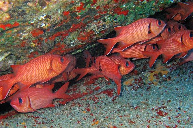 Kauai's Ultimate Guided Shore Snorkeling Adventure